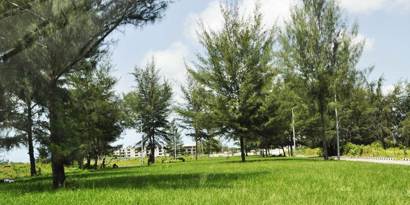 Banana_Island_Playground