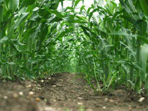 Lucrative farming in Nigeria