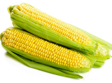 How to Cultivate Hybrid Maize in Nigeria | Wealth Result