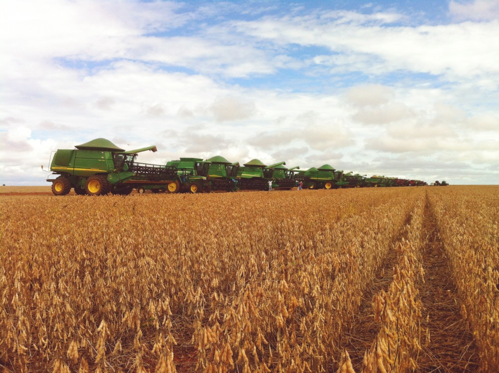 Soybeans Farming