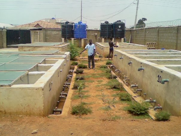 How to start fish farming in nigeria kenya and ghana for Local fishing ponds
