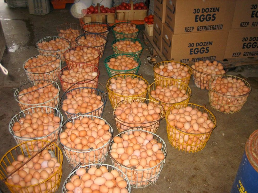 Eggs Supply Business