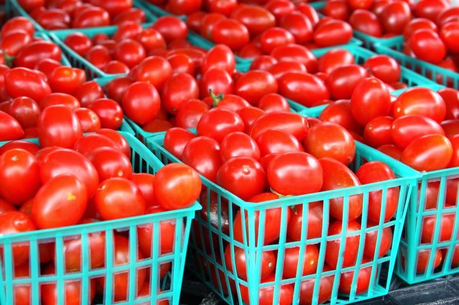 Starting a Tomato Farming