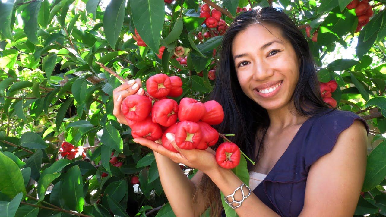 How to start bell apple farming