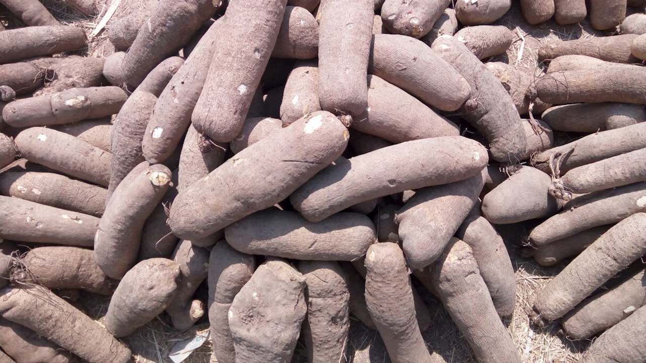 Exporting Yam from Nigeria