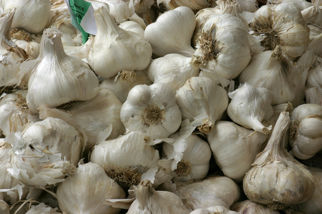 Fresh Garlic Export From Nigeria