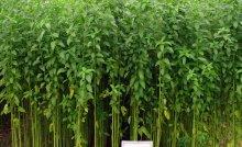 Yam farming - How To Start Yam Farming (Beginners Guide)