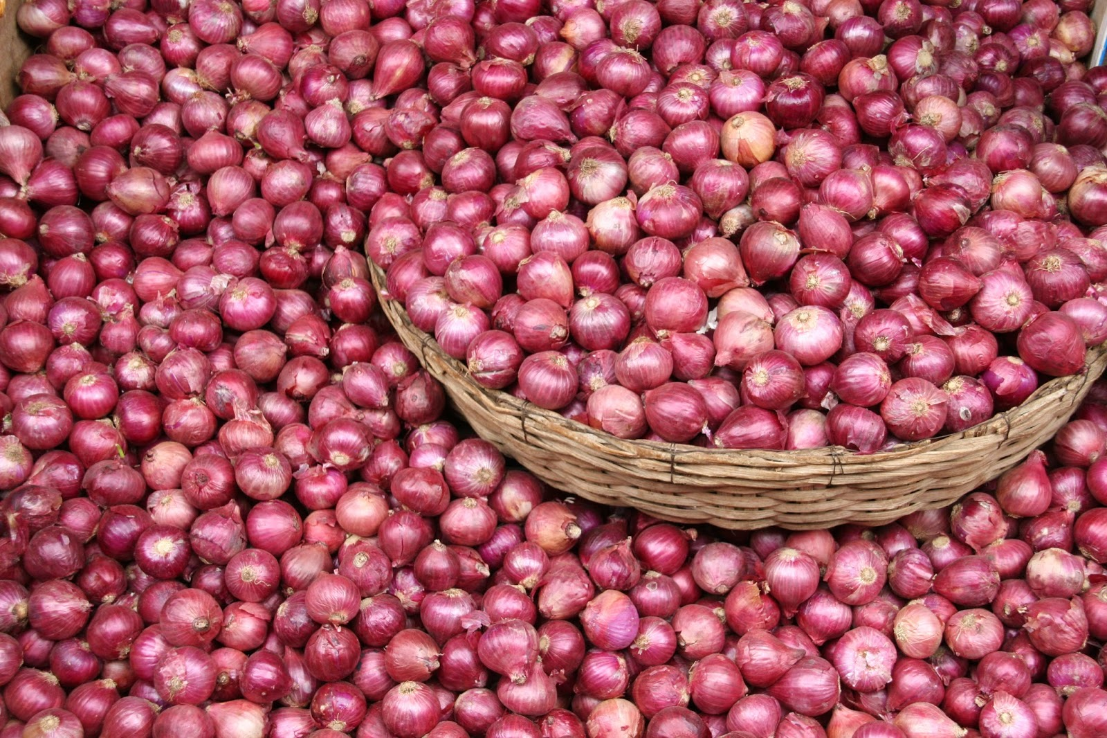 Onions Farming in Nigeria