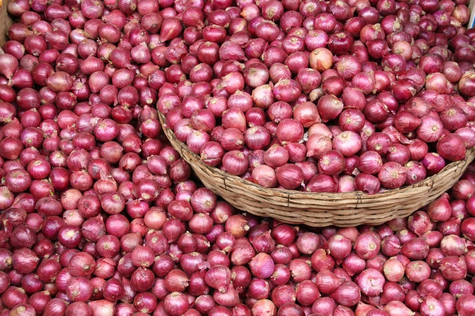 Onions Farming in Nigeria