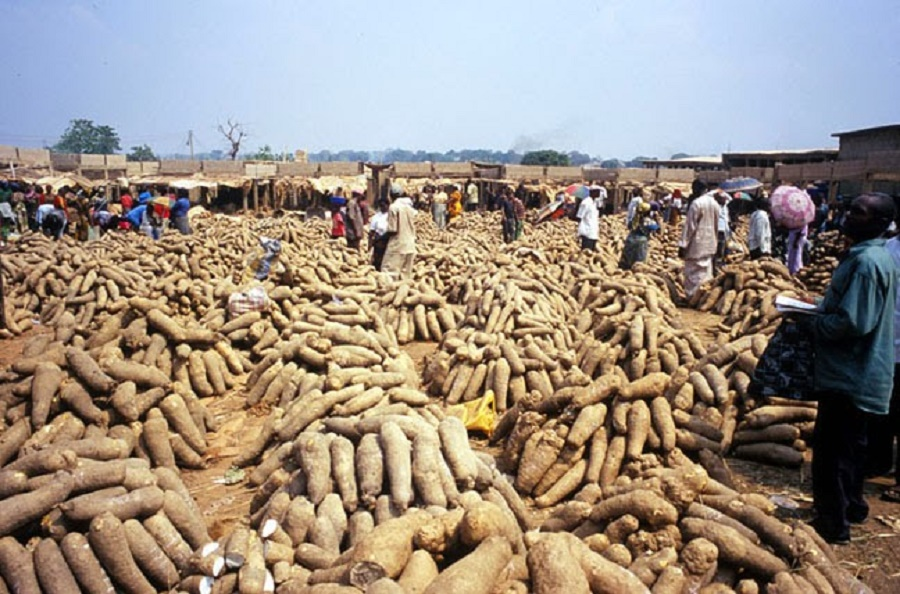 Nigerian Yam: How To Start Exporting Yam To Oversea From Nigeria