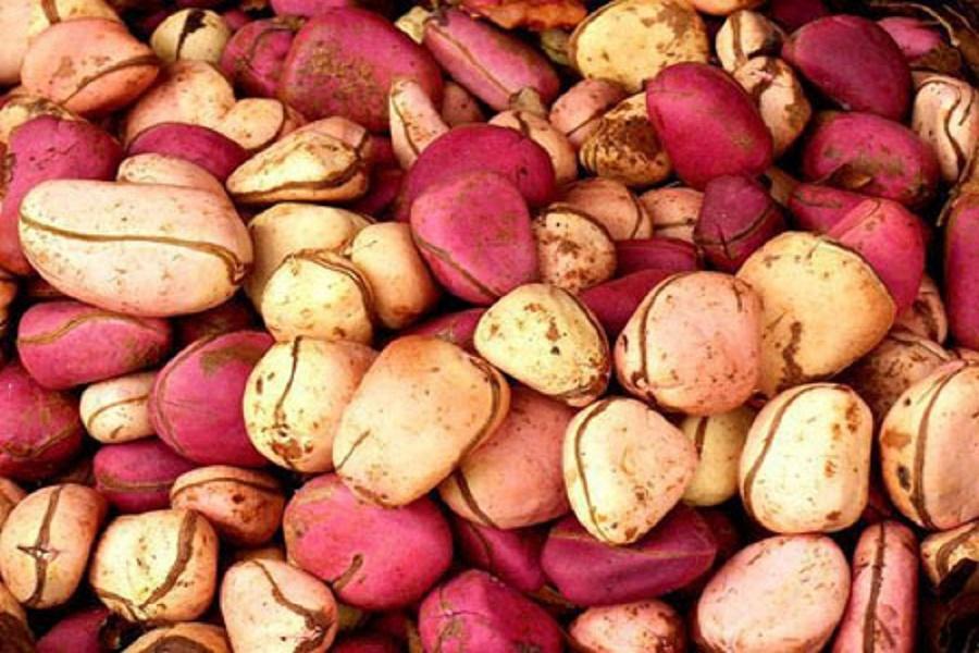 Kola Nut Export