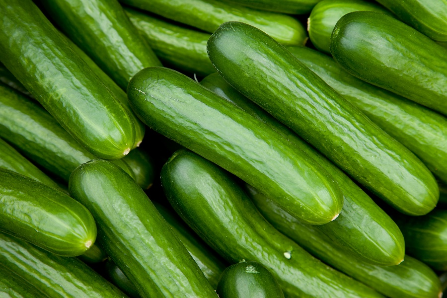 Cucumber-farming-in-nigeria