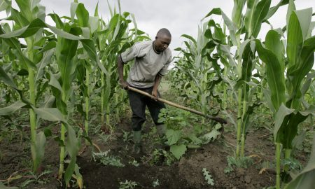 How To Boost Nigerian Economy Through Agriculture