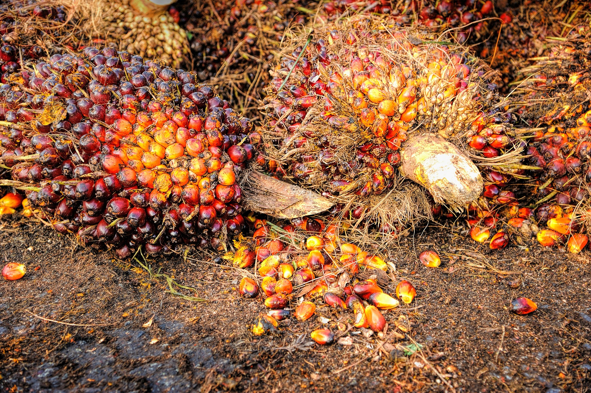 Palm oil processing business in Nigeria