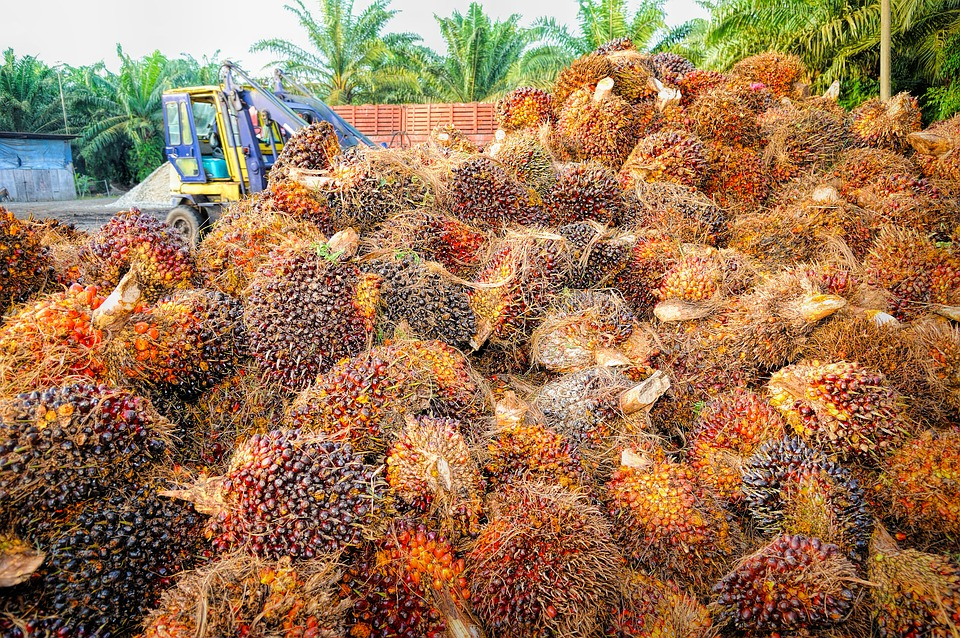 Feasibility study on palm oil production in Nigeria