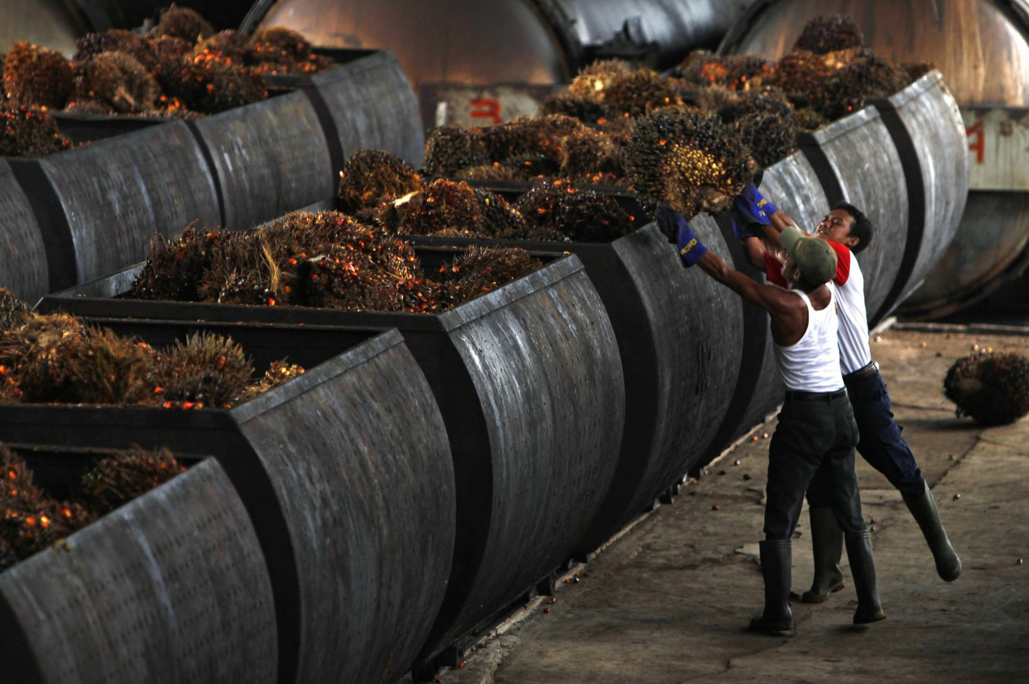 Palm Oil Processing Business Plan in Nigeria