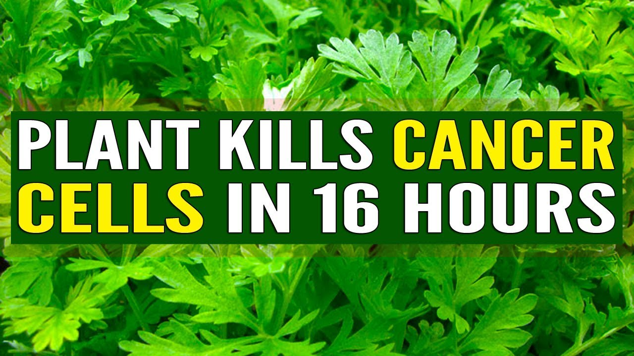Cure for Cancer Herbals