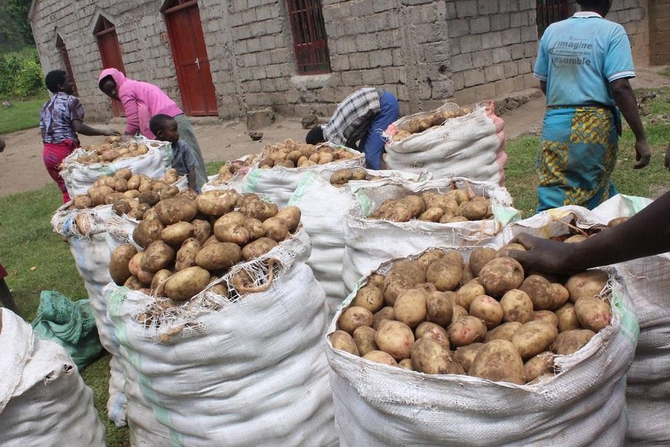 Irish potato market in Nigeria