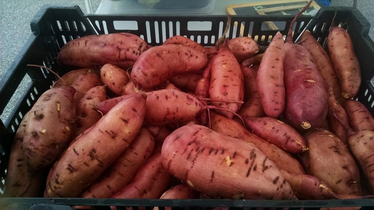 Sweet Potato Farming