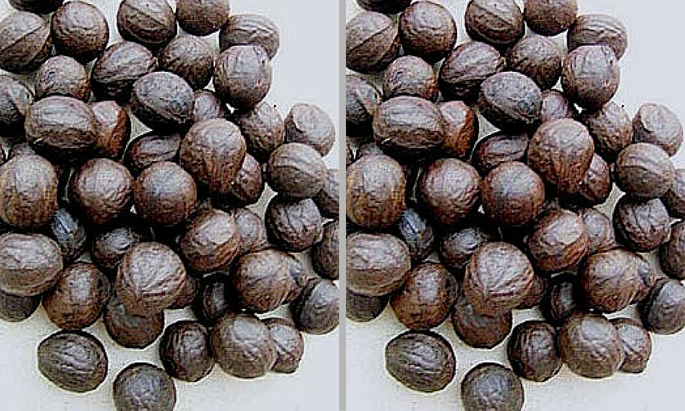 African Walnut Farming