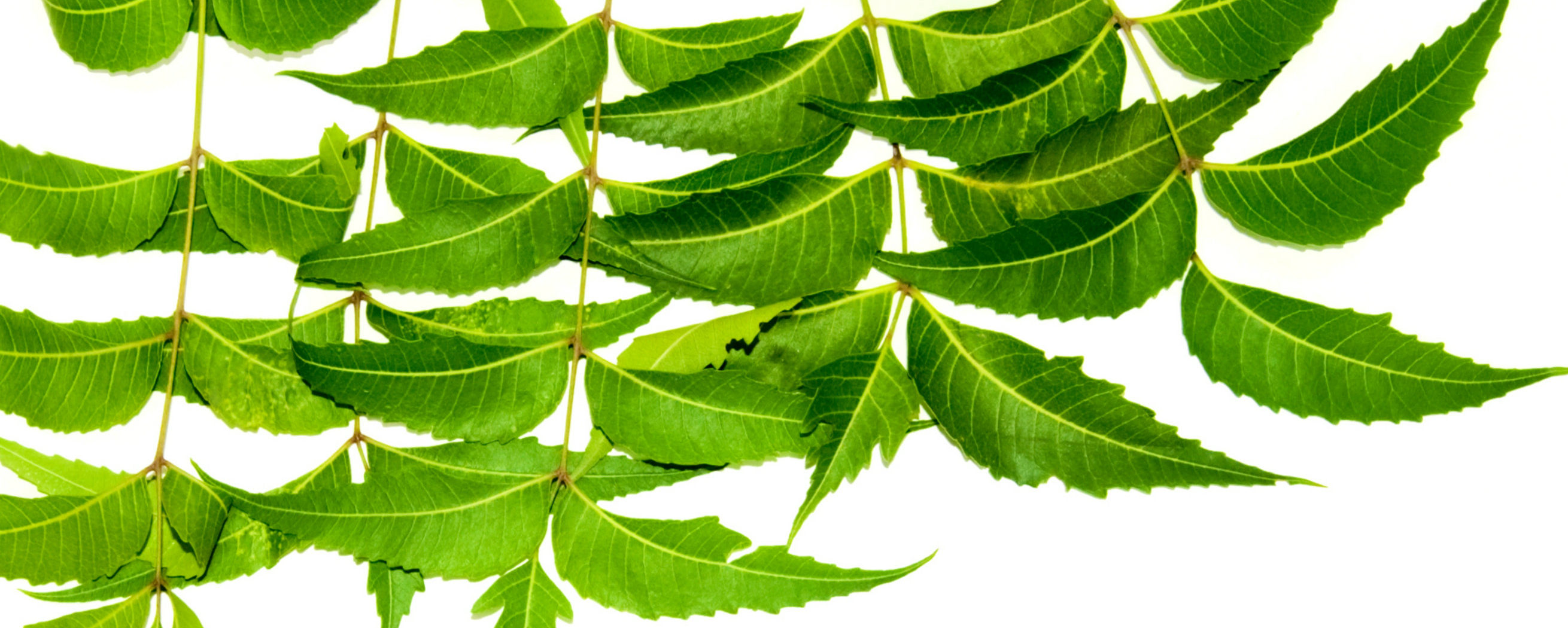 Health Benefits of Neem Leaves